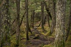 Ślad przez tropikalnego lasu deszczowego obrazy stock