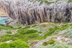 Ślad, roślinność, falezy i ocean w Cabo De Sao Vincente, Zdjęcie Royalty Free