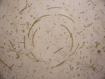 Ślad samochodowi zimy opony kolce na podłoga Obrazy Stock