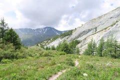 Ślad w Altai górach łąkowych Lato w Altai g?rach fotografia royalty free