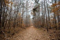 Ślad w Clemson Eksperymentalny Forrest zdjęcie stock