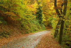 Ślad w jesień lesie Obrazy Stock