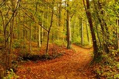 Ślad w lesie Obrazy Royalty Free