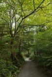 Ślad w lesie obraz royalty free