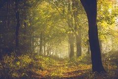 Ślad w lesie i ranek zaświecamy z mgłą podczas jesieni Fotografia Royalty Free