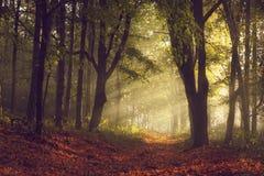 Ślad w lesie i ranek zaświecamy z mgłą podczas jesieni Fotografia Stock
