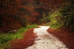 Ślad w lesie podczas jesieni Obraz Stock