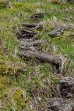 Ślad w lesie robić bele Zdjęcia Royalty Free