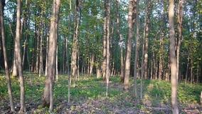 Ślad w parku Gładzi panoramy krzywka strzał i zwalnia Czysty i jaskrawy dzień w wiośnie zdjęcie wideo