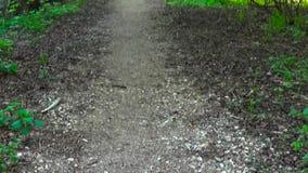 Ślad w parku Gładzi pionowo panoramy krzywka strzał i zwalnia Czysty i jaskrawy dzień w wiośnie zbiory wideo