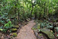 Ślad w tropikalnym tropikalnym lesie deszczowym Zdjęcie Stock