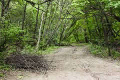 Ślad w zielonym lesie fotografia stock