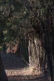 Ślad z suchymi liśćmi i drzewami obrazy royalty free