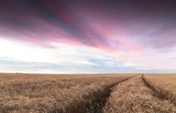 Ślada ciągnik w polu adra z chmurnym niebem Fotografia Royalty Free