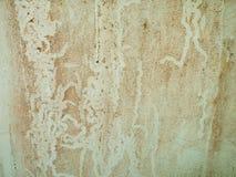 Ślada grzyb na ścianie zdjęcia stock