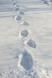 Ślada na śniegu Zdjęcia Royalty Free