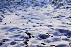 Ślada na śniegu w zima krajobrazie Obraz Royalty Free
