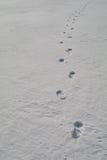 Ślada na ciężkim śniegu obrazy stock
