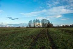 Ślada toczą wewnątrz pole, nawożący pole z nawozem, drzewa bez liści obraz royalty free
