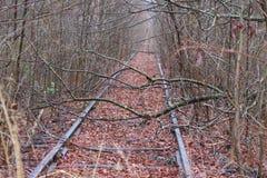 ślada trenują zima drewna Fotografia Royalty Free