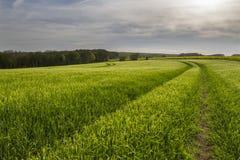 Ślada w uprawy polu nad wsią Obrazy Royalty Free
