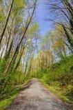Śladu sposób w lesie fotografia stock