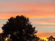 Śledzony drzewo przy zmierzchem, pomarańczowy niebo, zakończenie up, krajobraz zdjęcia stock