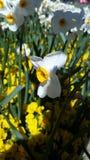 Śledzony kwiat obraz royalty free