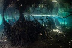 Śledzony Namorzynowy Lasowy Podwodny w Raja Ampat fotografia stock