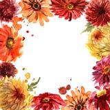 Śliczna akwarela kwiatu rama z gerberas i chryzantemą zaproszenie karty poboru ślub ilustracyjny urodzinowej karty prezenta króli Fotografia Stock