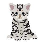 Śliczna Amerykańska shorthair kota figlarka Zdjęcie Royalty Free
