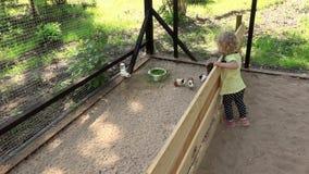 Śliczna berbeć dziewczyna cieszy się królików doświadczalnych zwierzęta w zoo klatce zbiory wideo