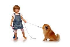 Śliczna caucasian mała dziewczynka trzyma czerwonego puszystego pomeranian psa na smyczu w wieku dwa roku odosobniony Obraz Stock