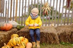 Śliczna chłopiec ma zabawę na rolniczym gospodarstwie rolnym przy jesienią Dziecko trzyma dekoracyjnej bani zdjęcie stock