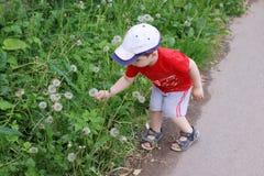 Śliczna chłopiec w nakrętce i czerwieni koszulce podnosi dandelions Fotografia Royalty Free
