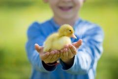 Śliczna chłopiec z kaczątko wiosną, bawić się wpólnie obraz royalty free