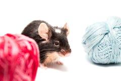 Śliczna czarny i biały mysz z nicią Obraz Royalty Free