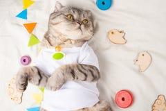 Śliczna figlarka na lekkim tle z dziecko zabawkami i pacyfikator, Reklamowy obrazek dla zwierzę domowe sklepów i zoo, odziewa zdjęcie stock