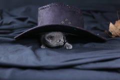 Śliczna figlarka z kapeluszem na swój głowie Fotografia Stock