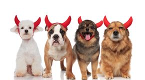 Śliczna grupa cztery różnego czarciego psa z czerwonymi rogami zdjęcie stock