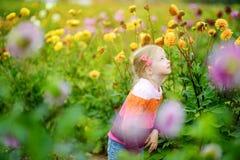 Śliczna mała dziewczynka bawić się w kwitnąć dalii pole Dziecko podnosi świeżych kwiaty w dalii łące na pogodnym letnim dniu Fotografia Stock