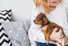 Śliczna mała dziewczynka bawić się z małym psem Zbliżenie fotografia obrazy royalty free