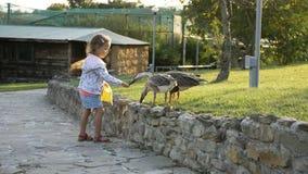 Śliczna mała dziewczynka karmi dzikie gąski przy zieloną lato łąką Obrazy Royalty Free