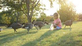 Śliczna mała dziewczynka karmi dzikie gąski przy zieloną lato łąką Fotografia Royalty Free