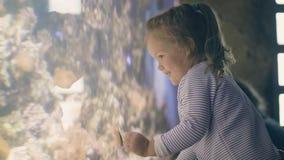 Śliczna mała dziewczynka ogląda tropikalnego rybiego dopłynięcie w podmorskim świacie w oceanarium zdjęcie wideo