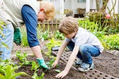 Śliczna mała preschool dzieciaka chłopiec i babcia zasadza zielonej sałatki w wiośnie obrazy stock