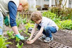 Śliczna mała preschool dzieciaka chłopiec i babcia zasadza zielonej sałatki w wiośnie fotografia royalty free