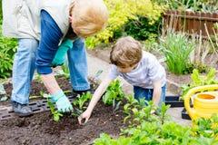 Śliczna mała preschool dzieciaka chłopiec i babcia zasadza zielonej sałatki w wiośnie zdjęcia royalty free
