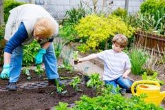 Śliczna mała preschool dzieciaka chłopiec i babcia zasadza zielonej sałatki w wiośnie obraz stock
