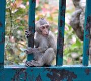 Śliczna Małpa Zdjęcia Royalty Free